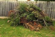 Green waste tips for residents of Morwell